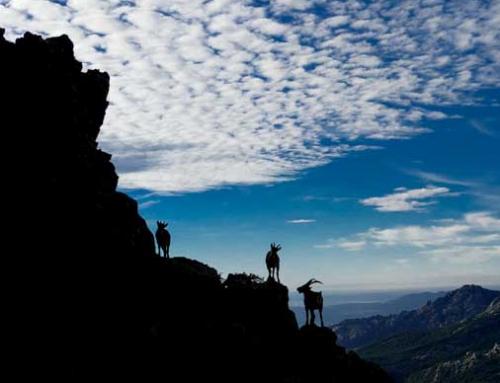 Rutas a medida por el Parque Nacional de Guadarrama