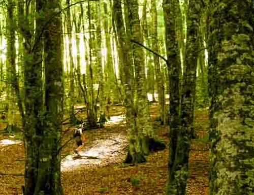 Trekking «Ruta de las Golondrinas»